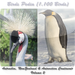 Birds Pedia Vol2 (Australia, New Zealand & Antarctica)